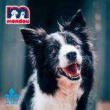 Gagnez jusqu'à 6 mois de nourriture pour votre animal grâce à Mondou!